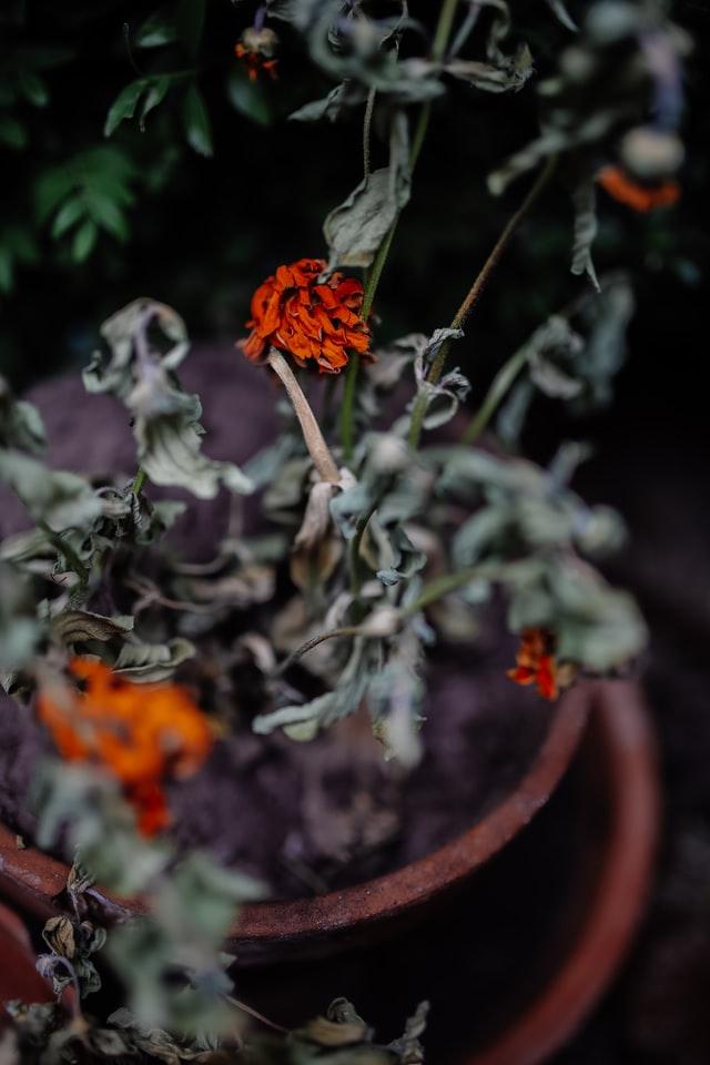 Blog post: Van haagscheersel tot compost: wat doe je met je groenafval?