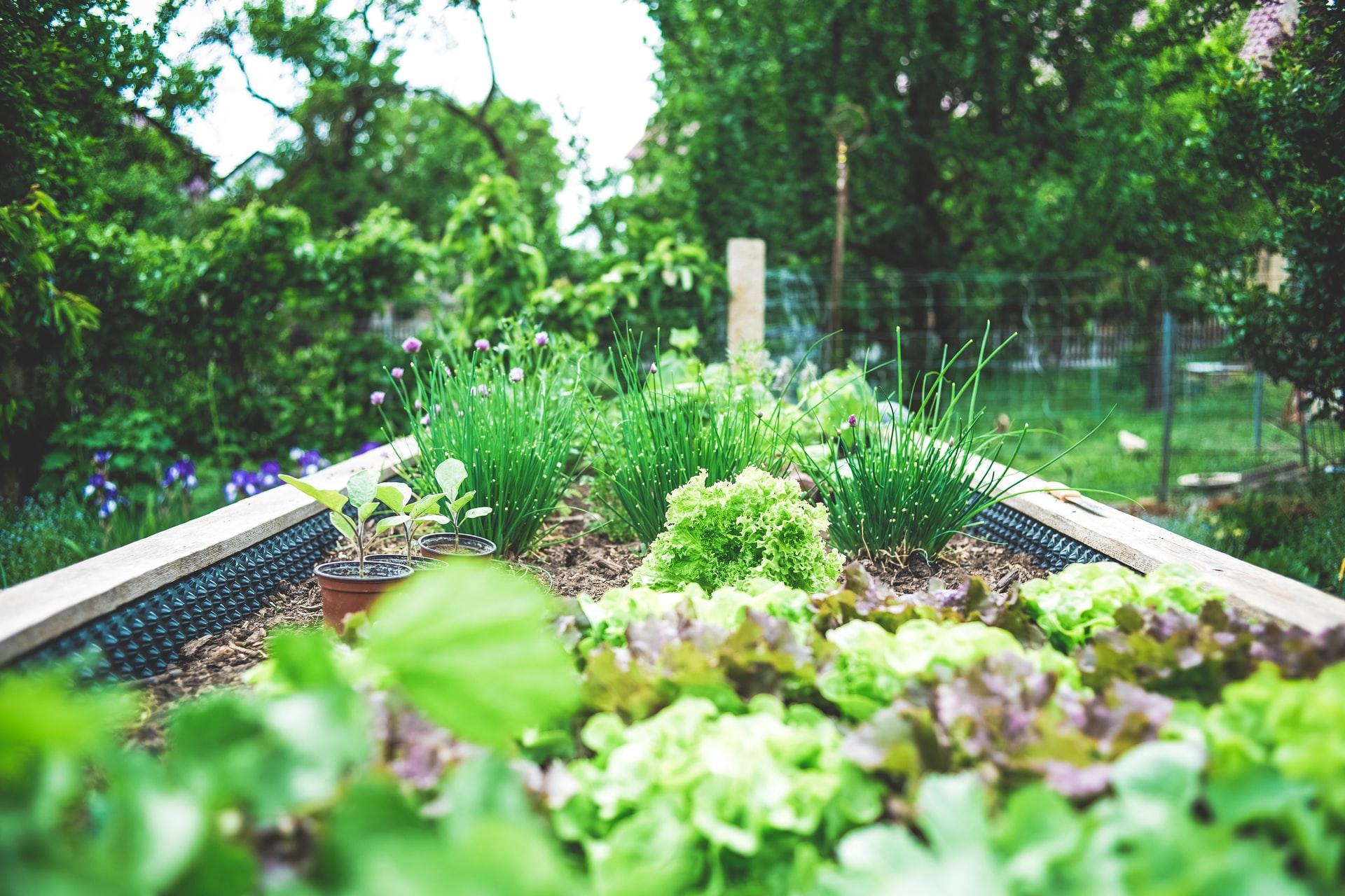 Blog post: Wat zijn de voordelen van compost voor je tuin?